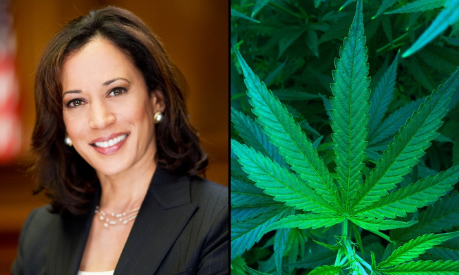 kamela harris cannabis