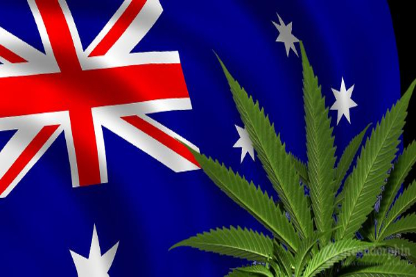 nz cannabis flag