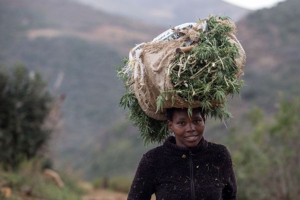 sa mpondoland cannabis carrying